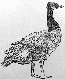 Goose -the logo for Native American Fiber Program